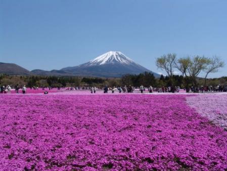 tntnH25-05-08本栖湖・龍神池の芝桜 (18)