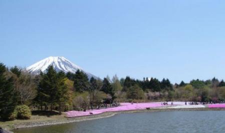 tntnH25-05-08本栖湖・龍神池の芝桜 (24)_1