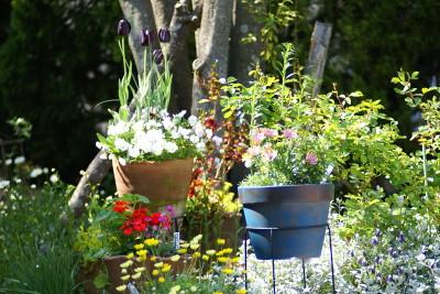 0427-5寄せ植え3鉢