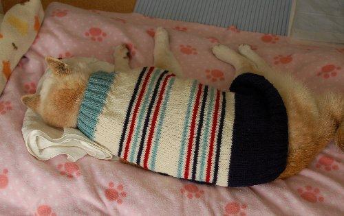 縞セーター1