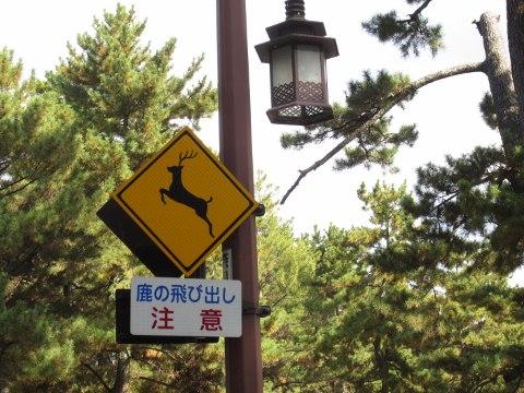 2012_11_21奈良1