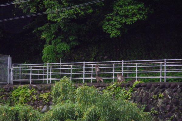 洲原神社近くの猿