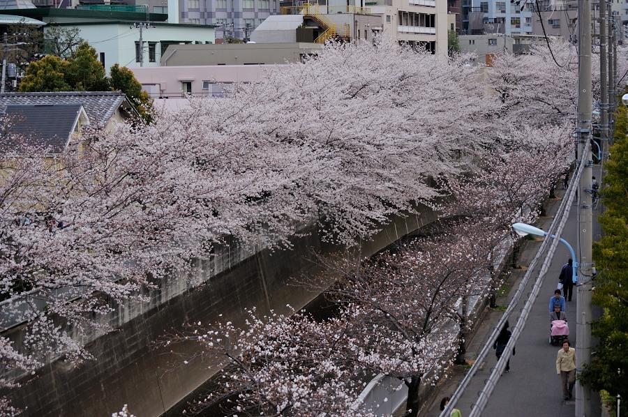 神田川__05