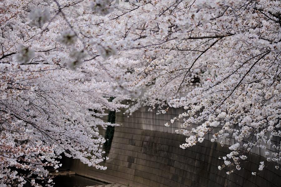 神田川__03
