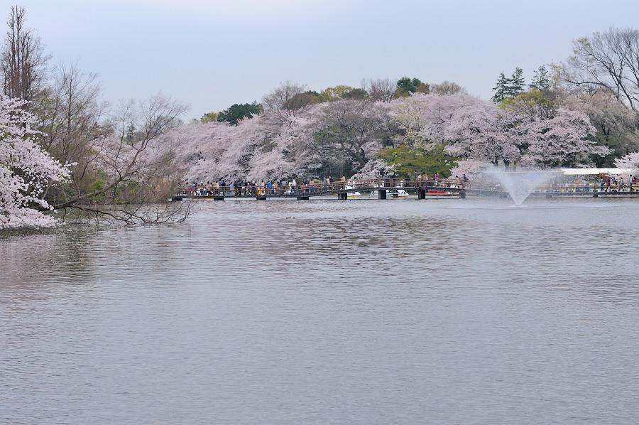井の頭公園__14