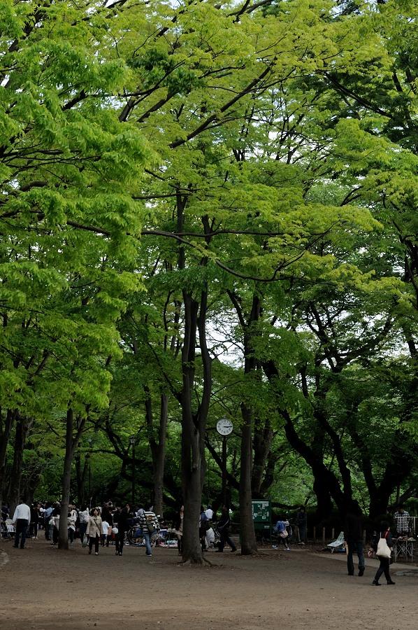 井の頭公園_