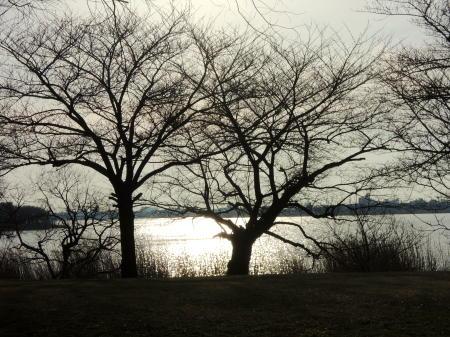 桜並木と鳥屋野潟