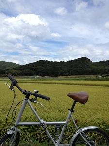 稲穂と自転車