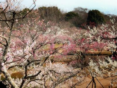 2013年3月10日 岩本山公園 1