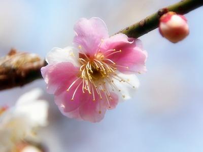 2013年3月10日 岩本山公園 2