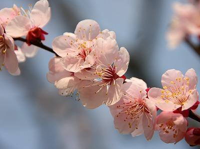 2013年3月10日 岩本山公園 3