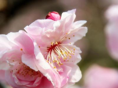 2013年3月10日 岩本山公園 4