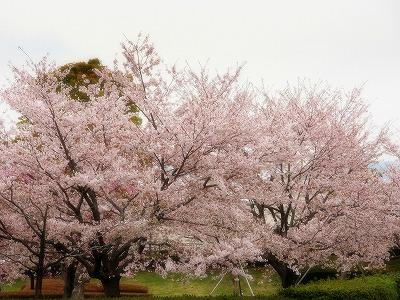 2013年3月31日 富士 150