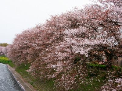 2013年3月31日 富士 012