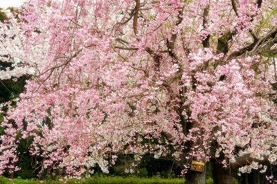2013年3月31日 富士 159
