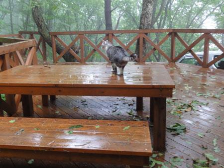 雨があがった!1