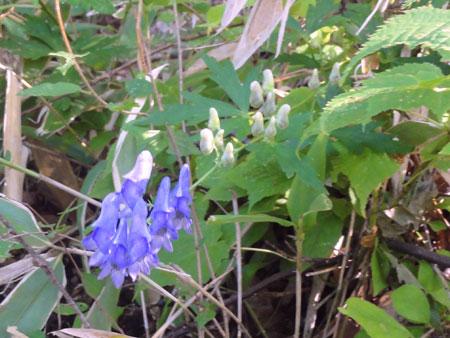 yamatorikabuto_20110910094405.jpg