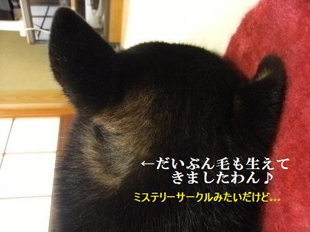 DSCF4112_20120319013943.jpg