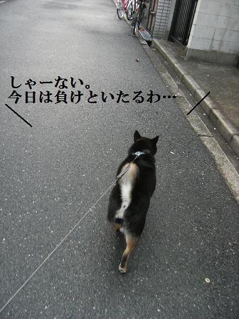 DSCF4188.jpg