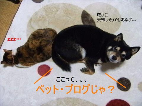 DSCF4231_20120316163927.jpg