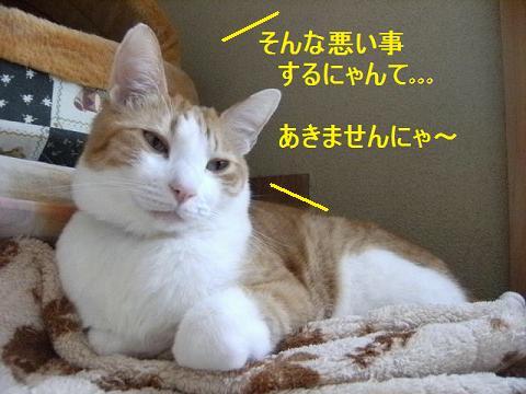 DSCF4664_20120526051445.jpg