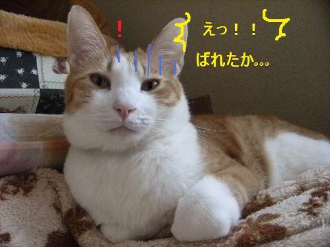 DSCF4668_20120526051444.jpg