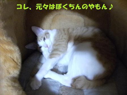 DSCF4755_20120601035153.jpg