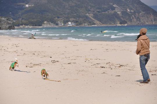 015砂浜散歩