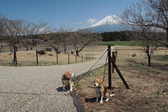 000富士山