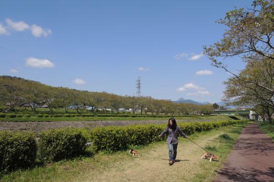 013川沿い散歩1