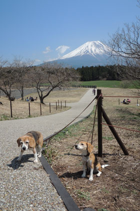 101ワンズと富士山2