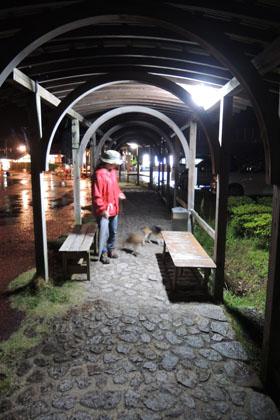 222夜の雨の散歩