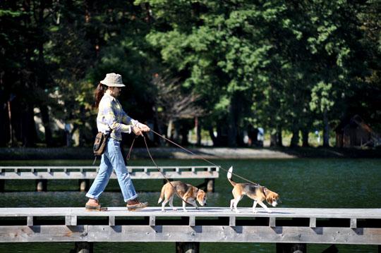 100木崎湖散歩1