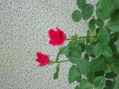 001_20120525074107.jpg