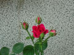 002_20120525074106.jpg