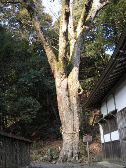 丹生川神社・下社20
