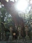 第1番納札社:若宮神社12