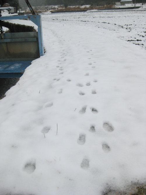 雪02-01