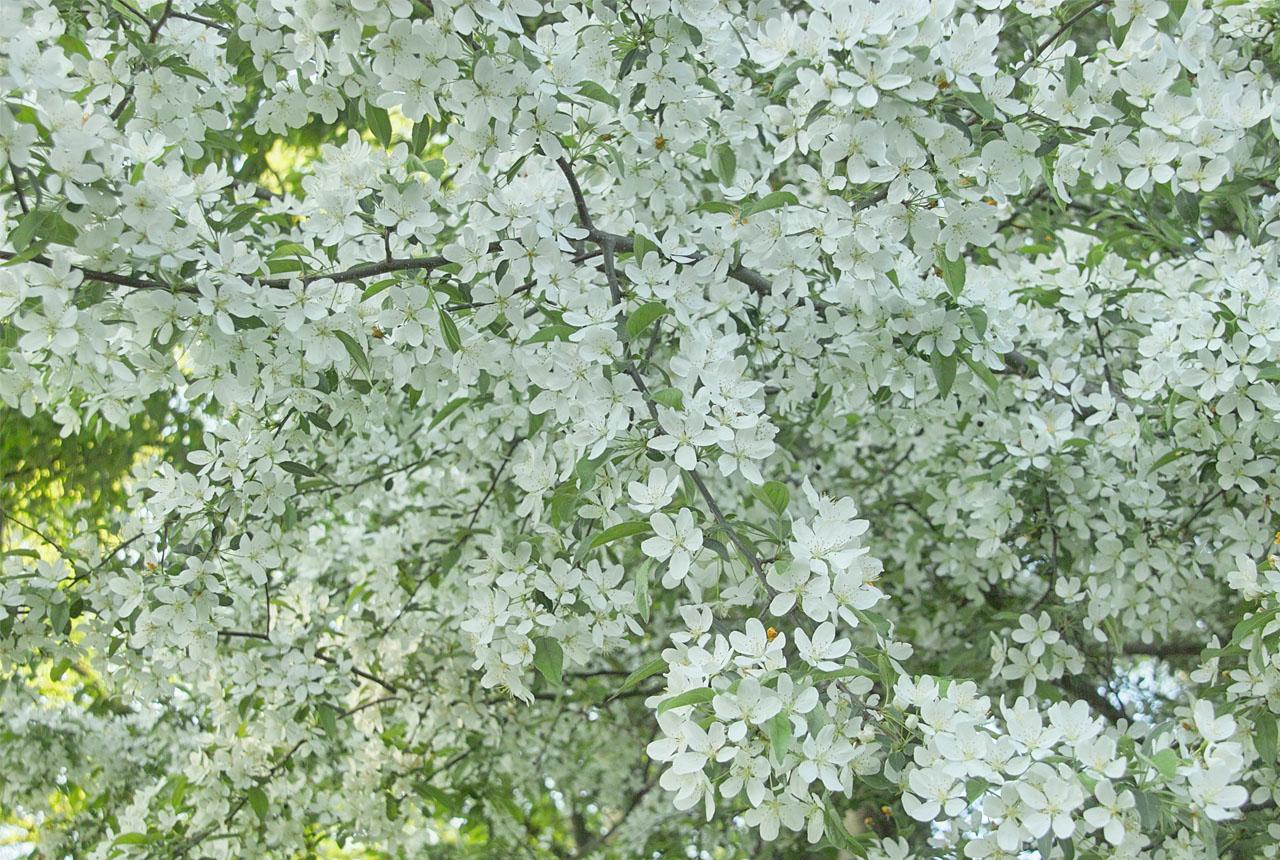 0679 白い花 1280×860