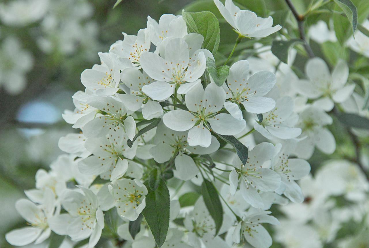 0682 白い花 1280×860