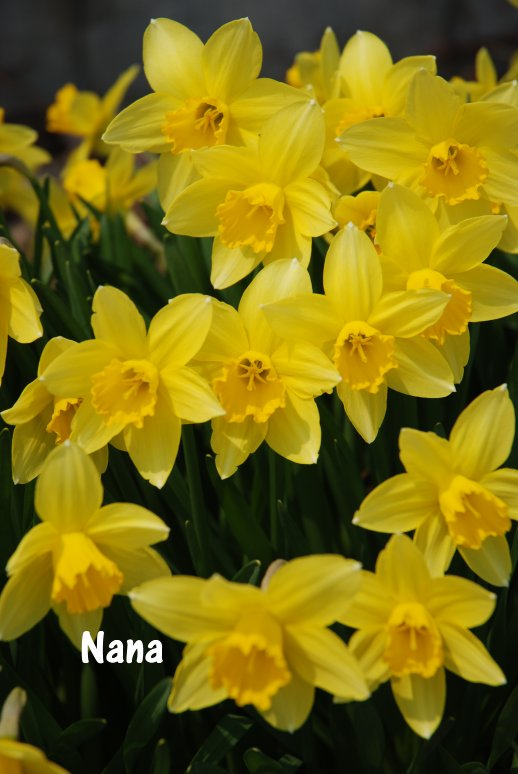spring20-3.jpg