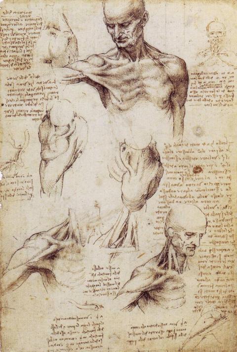 Leonardo13.jpg