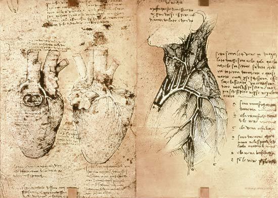 Leonardo15.jpg