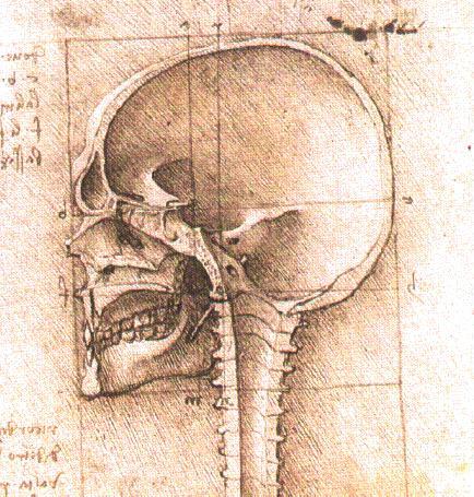 Leonardo3.jpg