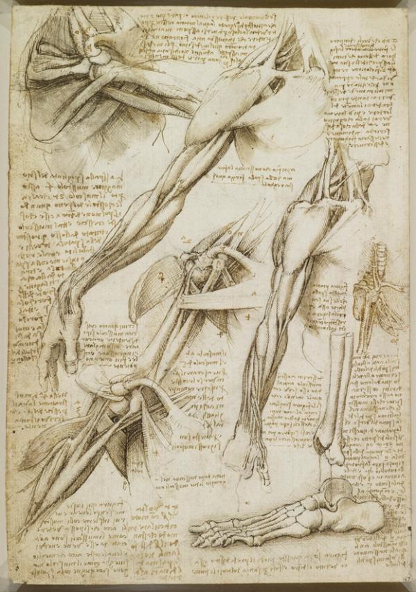 Leonardo30.jpg