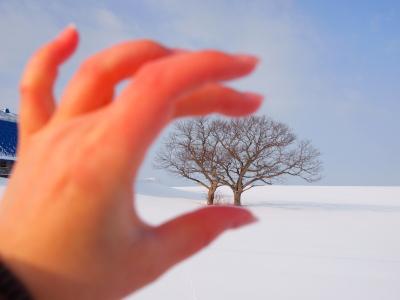 4ふたごの木