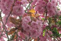 flowershowth04135