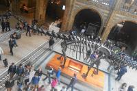 londonnaturalhistorymuseum