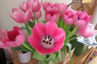 tulipsbirthday