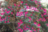 flowershowth04133